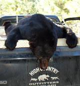 honer-bear